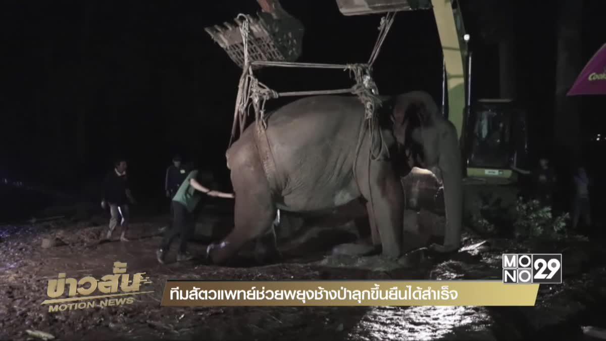 ทีมสัตวแพทย์ช่วยพยุงช้างป่าลุกขึ้นยืนได้สำเร็จ