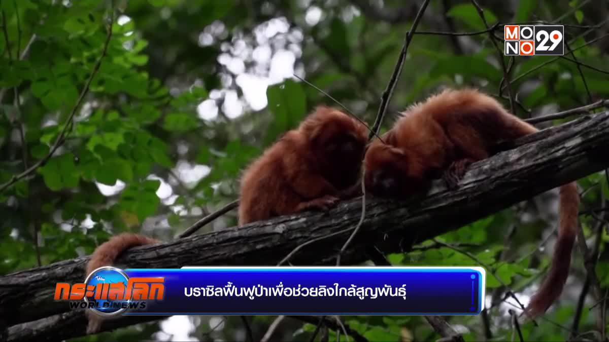 บราซิลฟื้นฟูป่าเพื่อช่วยลิงใกล้สูญพันธุ์