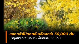 กรมป่าไม้ แจกกล้าไม้ดอกสีเหลืองกว่า 50,000 ต้น นำถุงผ้ามาใส่ ให้เพิ่มคนละ 3-5 ต้น