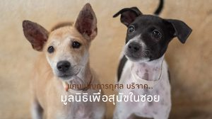 ทำบุญในแบบคนยุคใหม่ ช่วยเหลือสุนัขและแมวนับพันชีวิต - มูลนิธิเพื่อสุนัขในซอย
