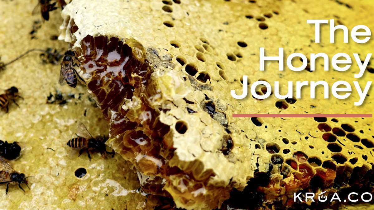The Honey Journey_ภารกิจตามล่าหาน้ำผึ้งป่า
