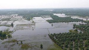 ชาวบ้านผวา! จระเข้นับสิบหลุดจากสวนสัตว์ นครศรีฯ หลังน้ำท่วมจมมิด