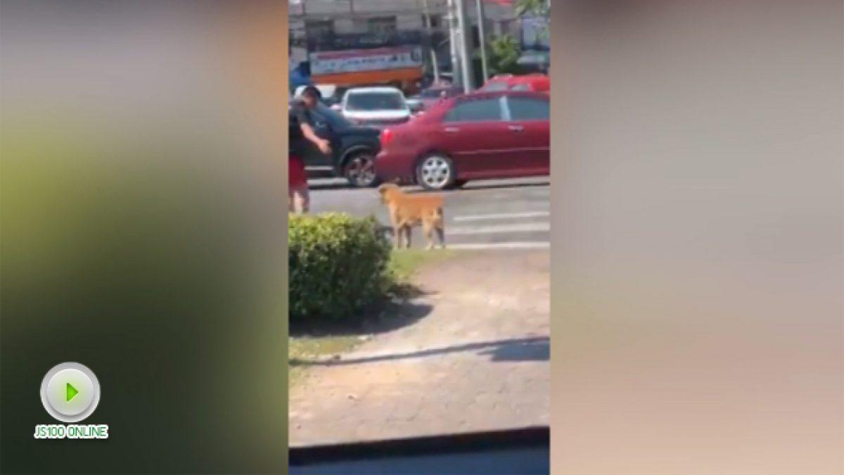 ชายใจดีพาน้องหมาข้ามถนน (18-01-61)