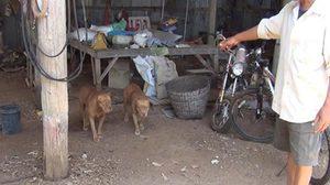 เจ้าของพิตบูลล์ เตรียมย้ายสุนัขออกจากหมู่บ้าน หลังกัดคนเจ็บเย็บกว่า 70 เข็ม