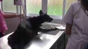 คนใจยักษ์ วางยาเบื่อหวังฆ่าหมาแม่ลูกอ่อน โชคดีช่วยทัน