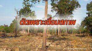 อ.อ.ป. ชี้แจงปม 'สวนป่ากันทรารมย์' จ.ศรีสะเกษ ยันไม่ได้โค่นทำลายป่าธรรมชาติ