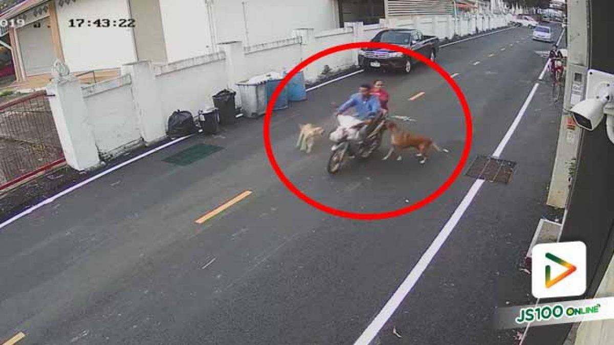 ชาวบ้านสุดทน!! เจ้าของหอพักปล่อยสุนัขไล่รถจยย. ผ่านไปมา จนเกิดอุบัติเหตุ
