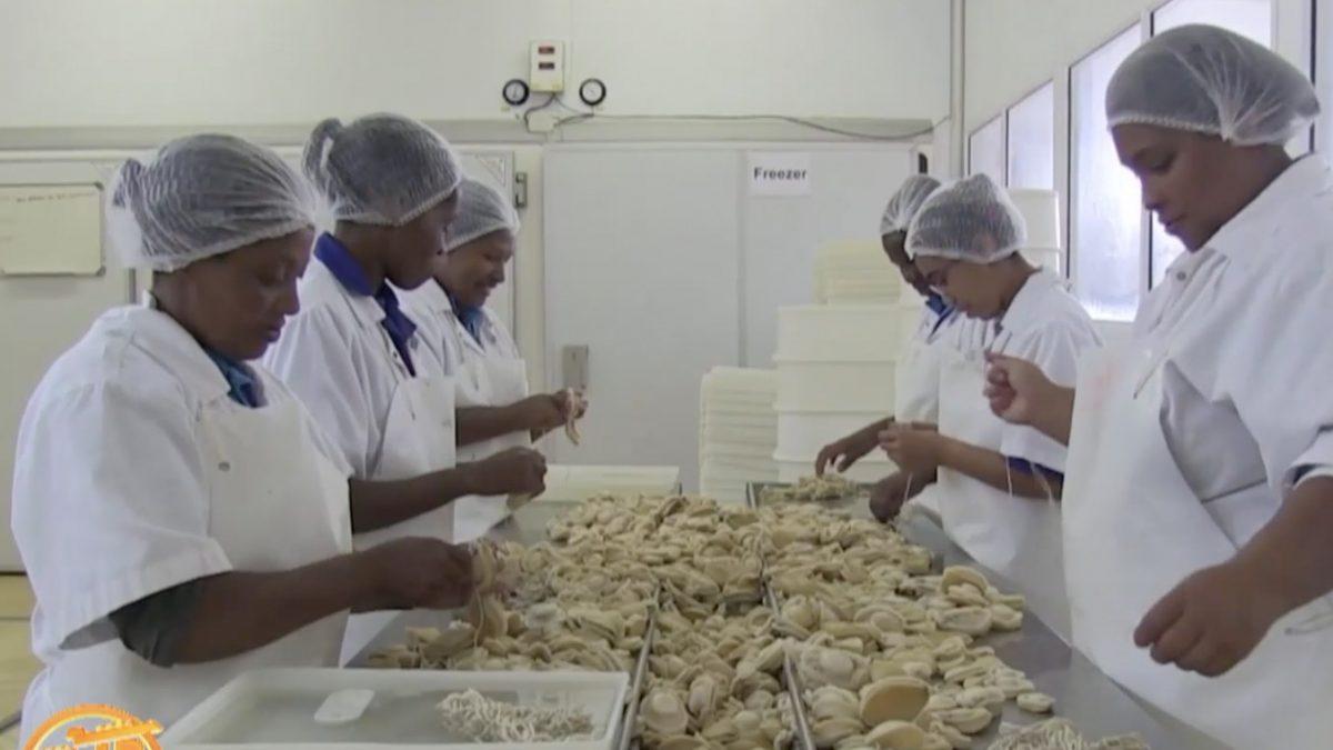 """อุตสาหกรรม """"หอยเป๋าฮื๊อ"""" แอฟริกาใต้"""