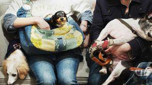พนักงานออฟฟิศญี่ปุ่นนำสัตว์เลี้ยงมาที่ทำงานมากขึ้น