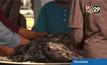 สมาชิกสภาผู้แทนฯสหรัฐร้องคว่ำบาตรกุ้ง-ปลาไทย