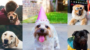 26 สิงหาคม วันสุนัขโลก