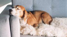 4 เคล็ดลับง่ายๆ ดูแลบ้านสำหรับคนที่มี สัตว์เลี้ยง