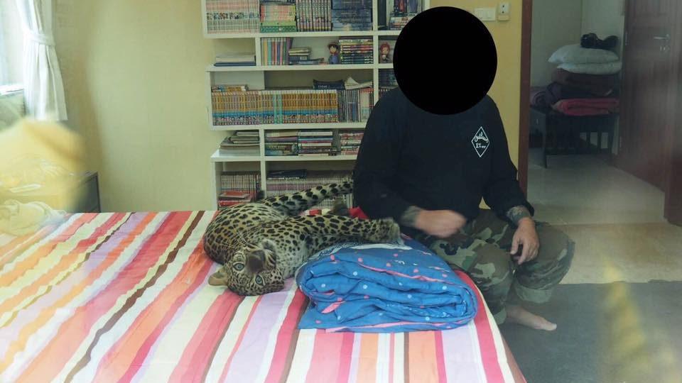 บุกค้นบ้านหรู หลังชาวบ้านแจ้งพบเสือดาวตัวเต็มวัย ถูกเลี้ยงในบ้าน
