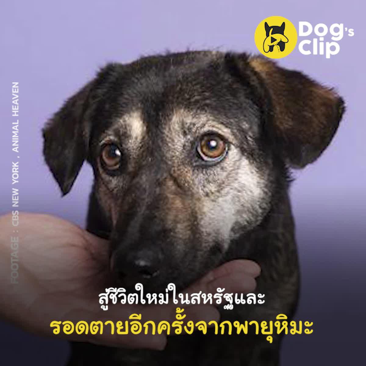 น้องหมาถูกช่วยให้รอดจากคมมีดในตลาดค้าเนื้อในไทยอย่างหวุดหวิด สู่ชีวิตใหม่ในสหรัฐและรอดตายอีกครั้งจากพายุหิมะ