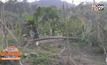 หวั่นถูกช้างป่าทำร้าย ชาวสวนหันกรีดยางกลางวัน