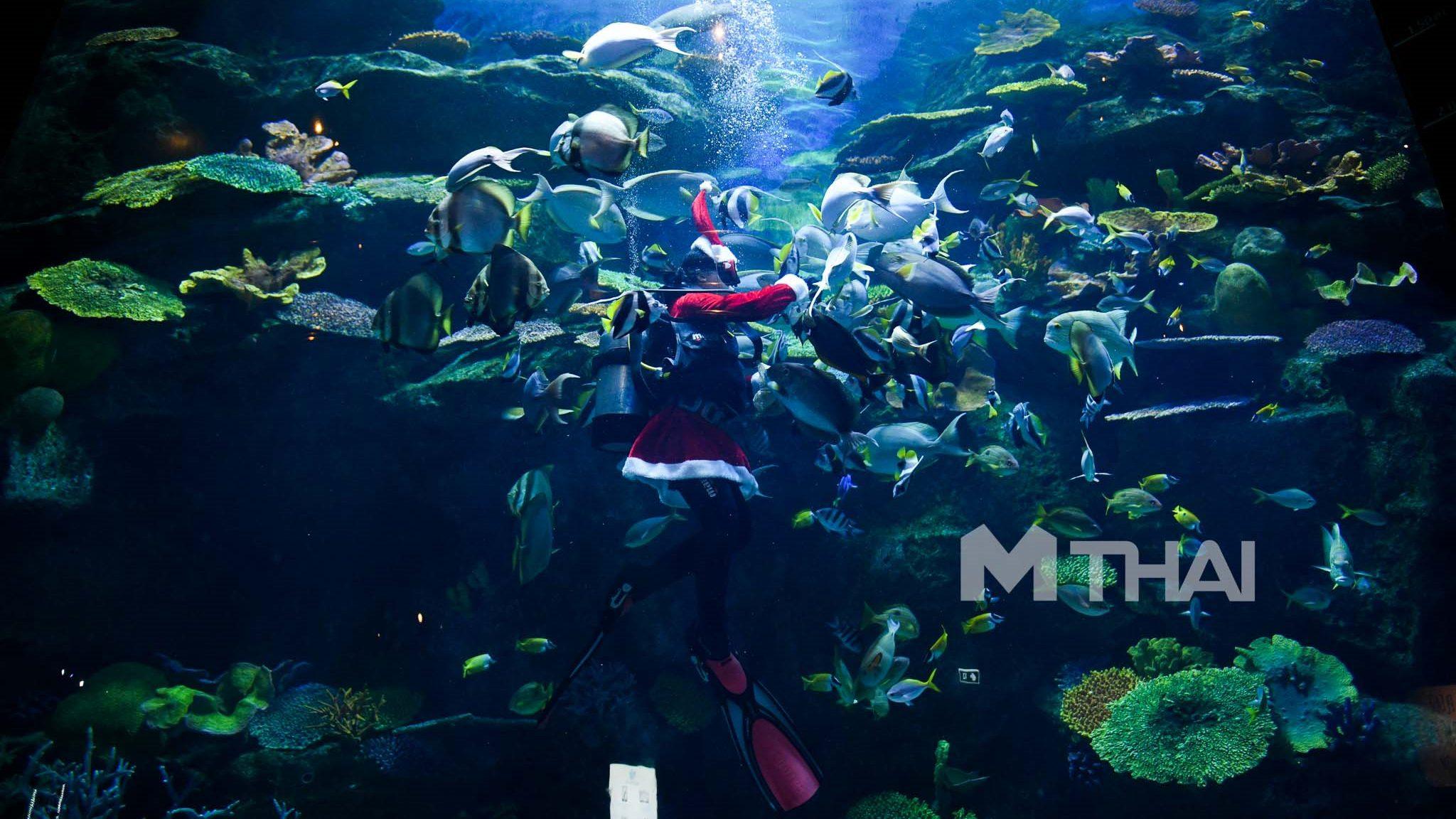 ซานตาคลอสแจกอาหารใต้น้ำ สีสันต้อนรับเทศกาลคริสต์มาส