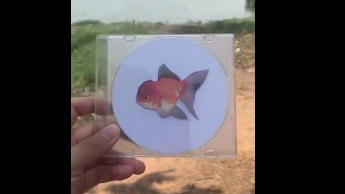 ปล่อยปลาตัวที่2 ที่บึงแก่นนคร จ.ขอนแก่น