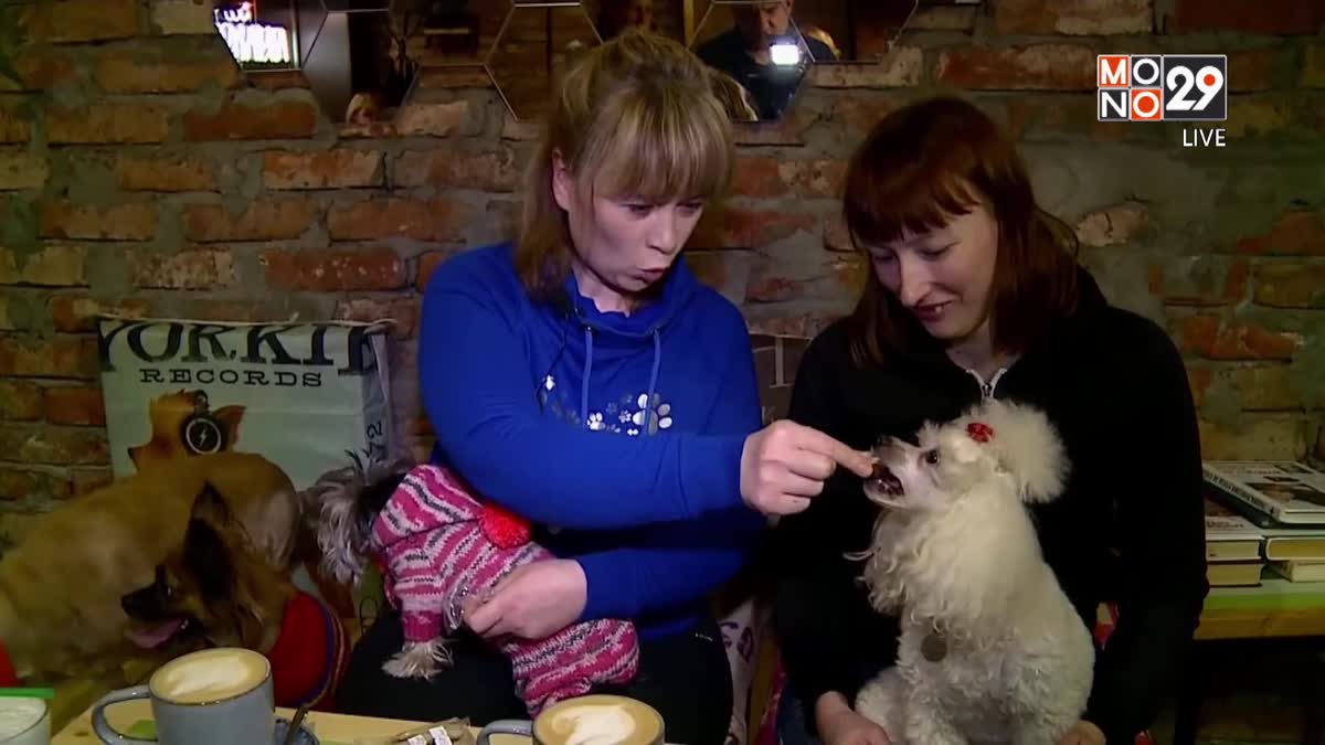 29 LifeSmart : LifeStyle คาเฟ่น้องหมาแห่งแรกในเมืองเปิยร์มของรัสเซีย