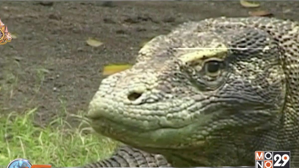 อินโดฯ ประกาศปิดเกาะโคโมโด 1 ปี