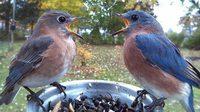 ภาพแอบถ่ายแสนน่ารัก ของเหล่านก ที่แวะเวียนมากินอาหารในสวนหลังบ้าน...