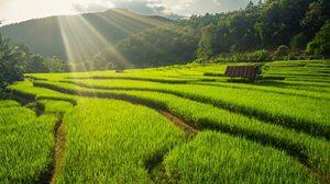 ชมวิวขั้นเทพ กับ 11 ที่เที่ยวนาขั้นบันได ในเมืองไทย