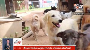 สัตวแพทย์เตือนอยู่ห่างฝูงสุนัข งดจ้องตา-ห้ามวิ่งหนี ป้องกันการถูกจู่โจม
