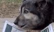 กิจกรรมวันสุนัขโลกในชิลี