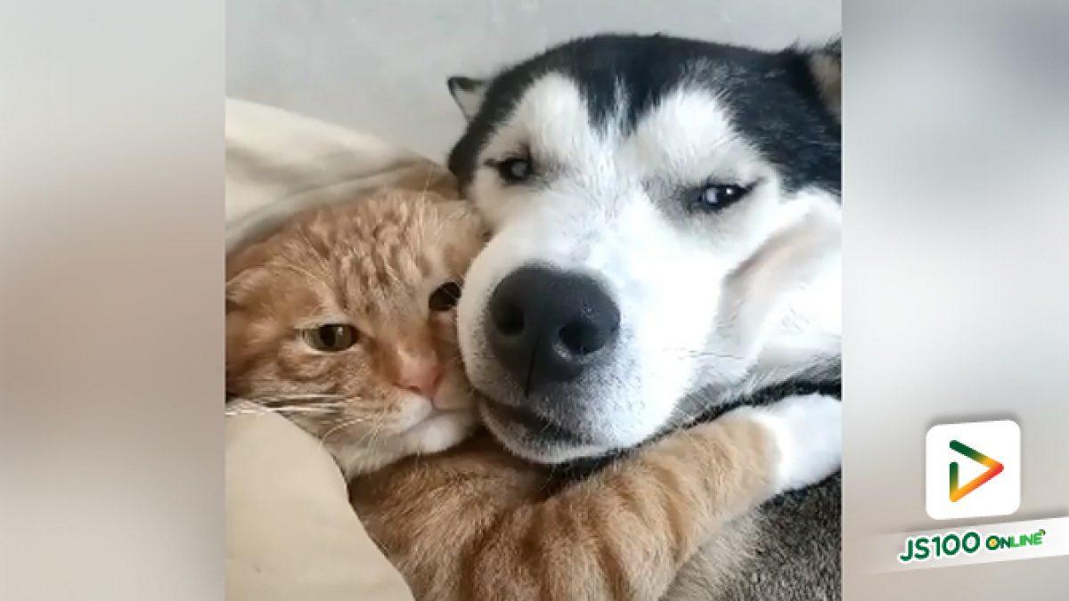 คลิปน้องหมาน้องแมวนอนกอดกันกลมเลย (11-10-61)