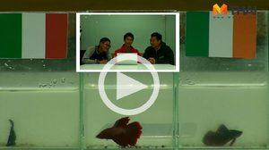 ซี้ซั้วฟันธง! ปลากัดทายผล ยูโร 2016 อิตาลี ปะทะ ไอร์แลนด์ (22 มิ.ย.)