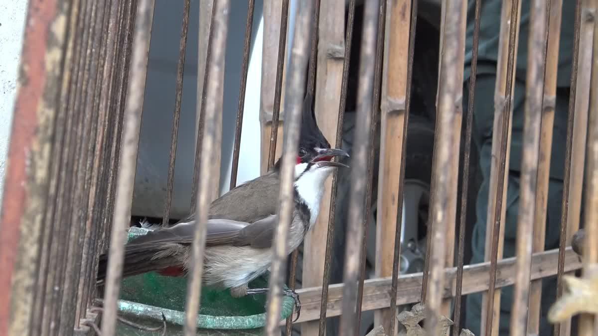 บุกจับ! ลอบเลี้ยง 'นกปรอดหัวโขน' ยึด 5 ตัว ส่งคลินิกสัตว์ป่า