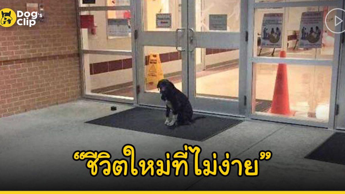 น้องหมาผู้ถูกทอดทิ้งนั่งเศร้าเฝ้าขอการช่วยเหลือหน้าประตูโรงเรียนทุกวัน
