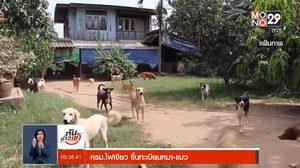 คณะรัฐมนตรีเห็นชอบ ขึ้นทะเบียนหมา-แมว ฝ่าฝืนมีโทษปรับสูง