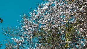 """เชิญนักท่องเที่ยวที่รักธรรมชาติและการท่องเที่ยวชุมชน เที่ยวงาน """"เทศกาลดอกเสี้ยวบาน ที่บ้านป่าเหมี้ยง"""""""