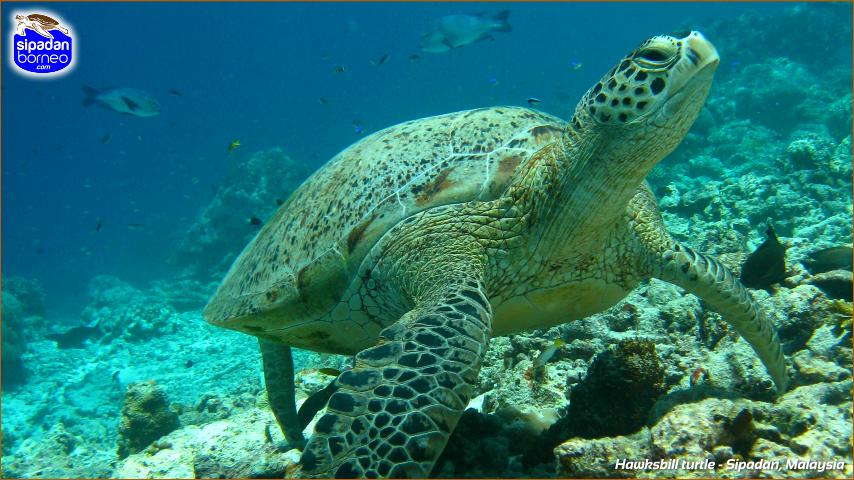 'เกาะมาบูล-สิปาดัน' สวรรค์ใต้น้ำ มัลดีฟมาเลเชีย!