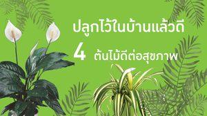 4 ต้นไม้ดีต่อสุขภาพ