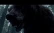 """เผยโฉมหน้าที่แท้จริง หมีป่าที่ฟัด """"ลีโอนาร์โด ดิคาปริโอ"""" ปางตาย"""