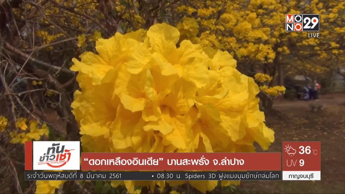 """""""ดอกเหลืองอินเดีย"""" บานสะพรั่ง จ.ลำปาง"""