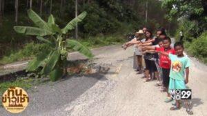 ชาวกระบี่ ปลูกกล้วยประชด กลางถนนพัง จนกล้วยออกลูกใกล้สุก