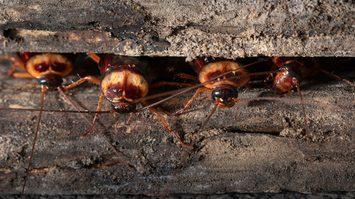 รู้ทัน 7 แหล่งมั่วสุมของ แมลงสาบ ภายในบ้านยามค่ำคืน