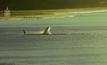 วาฬอพยพในอาร์เจนตินา