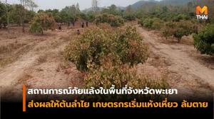 สถานการณ์ภัยแล้งในพื้นที่จังหวัดพะเยา กระทบต้นลำไย ยืนต้นตายจำนวนมาก