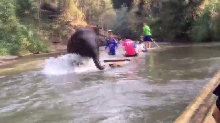 นาทีระทึก! ช้างน้อยพุ่งชนแพพลิกคว่ำ นักท่องเที่ยวว่ายน้ำหนีตาย