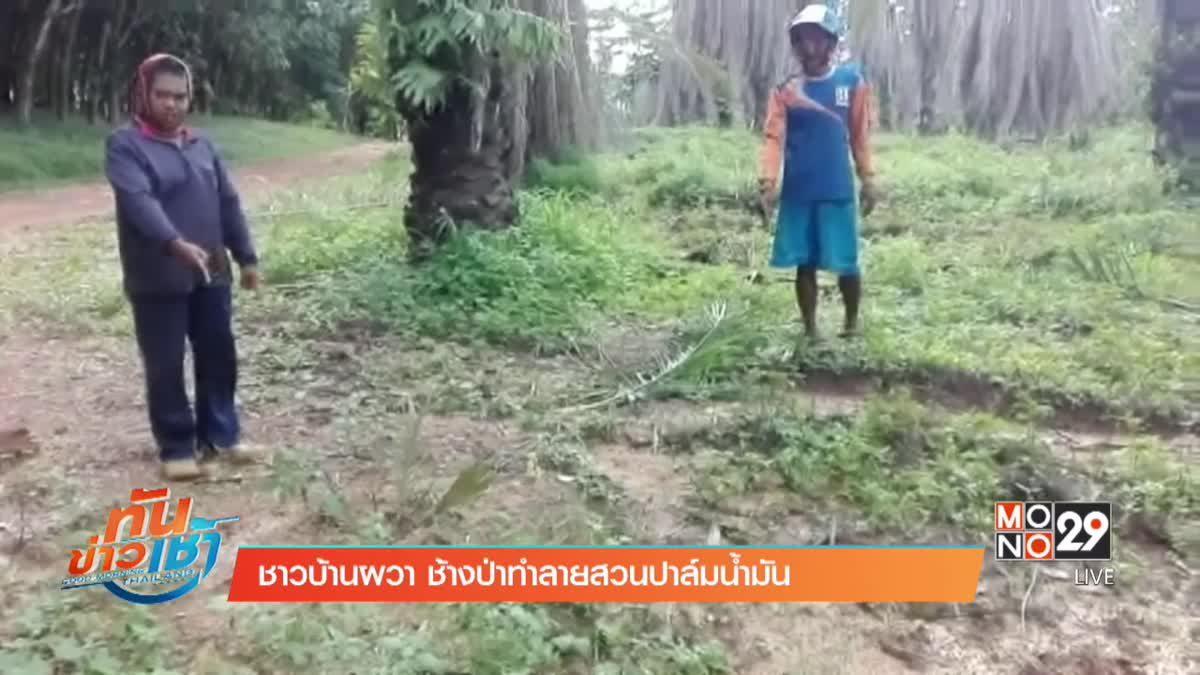 ชาวบ้านผวา ช้างป่าทำลายสวนปาล์มน้ำมัน