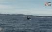 อนุรักษ์ฝูงวาฬเพชรฆาตในแคนาดา
