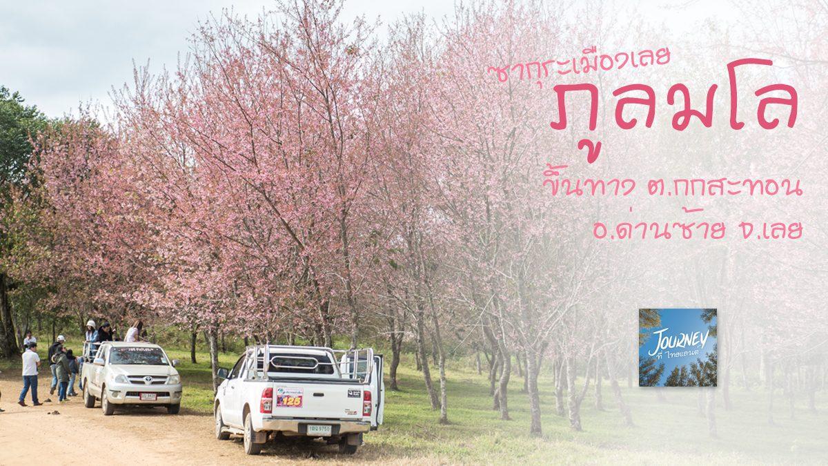 ภูลมโล (ภูเขาสีชมพู ดินแดนซากุระเมืองไทย)