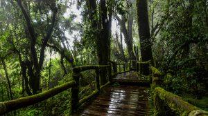 ผจญผืนป่าจูราสสิก เส้นทางศึกษาธรรมชาติอ่างกา ดอยอินทนนท์