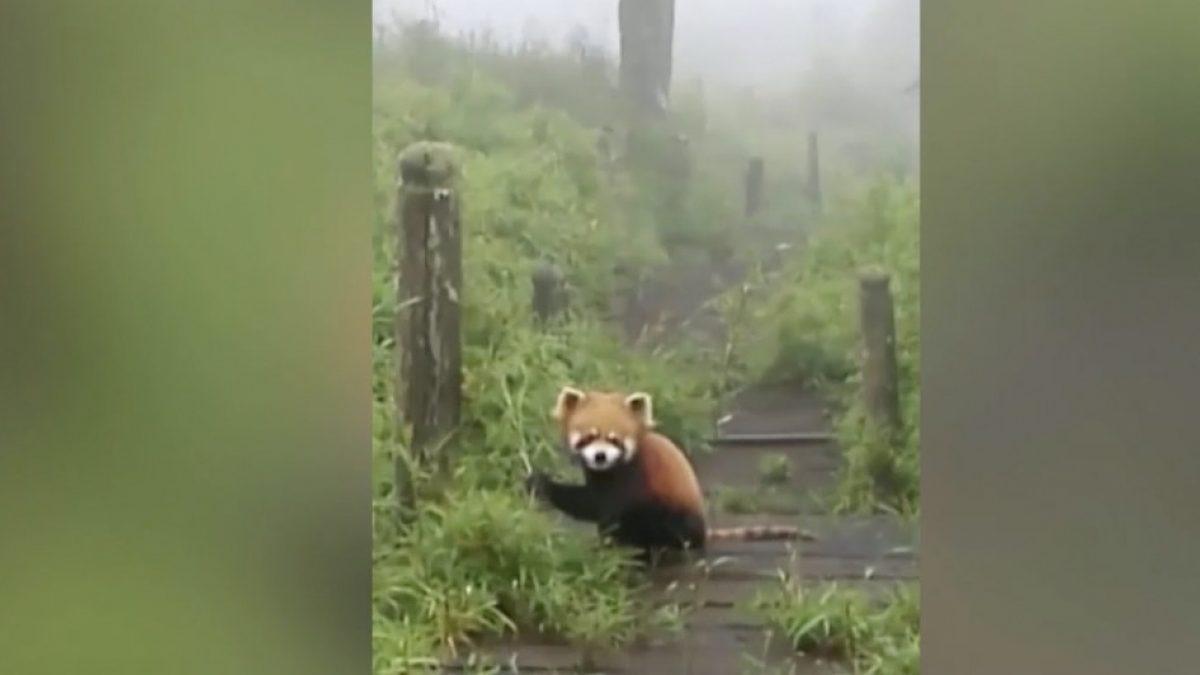 เผยภาพสัตว์ป่าหายากในเขตอนุรักษ์จีน