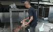 """จับสุนัขจรจัดใน""""รพ.แม่สอด""""หลังพบเชื้อพิษสุนัขบ้า"""