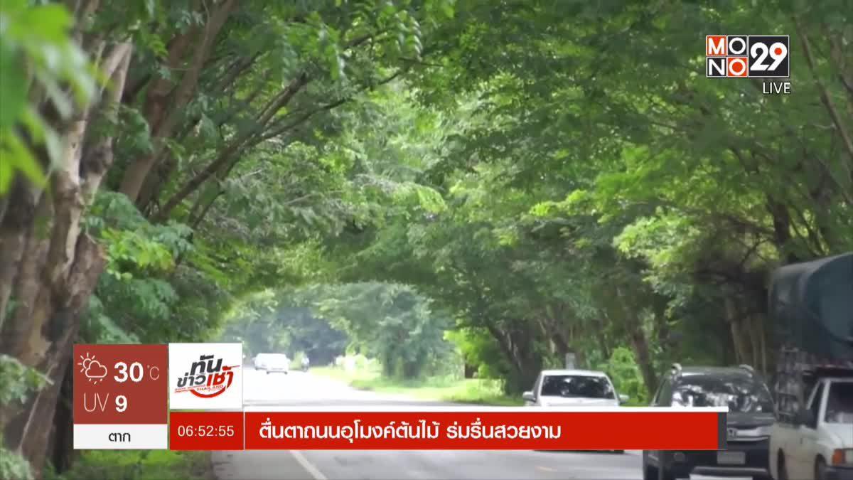 ตื่นตาถนนอุโมงค์ต้นไม้ ร่มรื่นสวยงาม