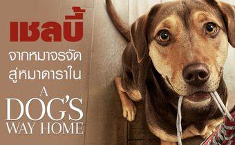 """""""เชลบี้"""" จากหมาจรจัด สู่หมาดาราใน """"A Dog's Way Home"""""""